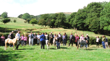 Blackhill ponies are paraded in front of the members at the foot of the hill