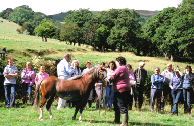 Members admire stud stallion Blackhill Picasso, a full brother to Blackhill Piccalo