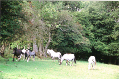 Mares and foals up the hill