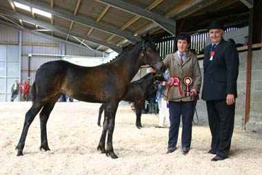 Mr Edwin Prosser presenting the Lloyd Jewellers Trophy for the Champion Welsh Part-bred to Meinir Evans with MALLAEN SONATA