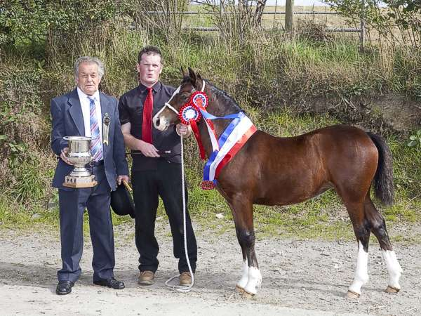 Dewi Jones Tremor stud the president at the show presents the Cup to Huw Jenkins of Brohedydd stud with flashy Lady